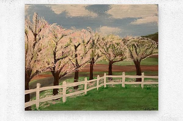 Trees In Bloom  Metal print