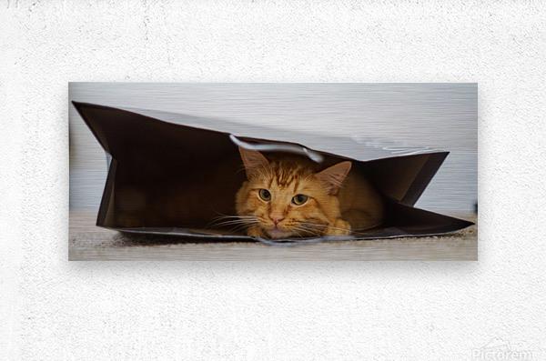 Cat In The Bag  Metal print