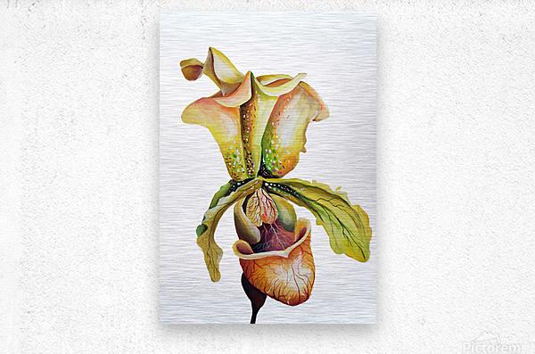 Blooming Paphiopedilum Orchids  Metal print