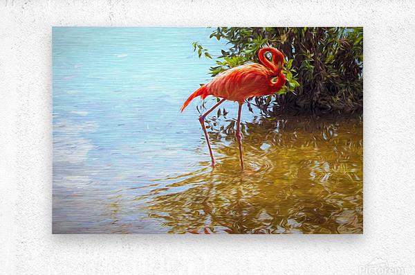 Pink Flamingo Wading In Water  Metal print