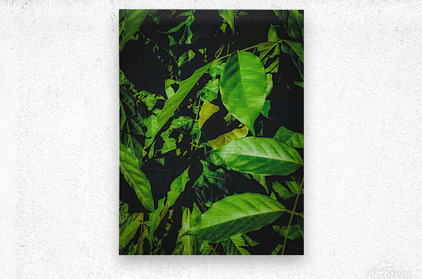 green leaves texture background  Metal print
