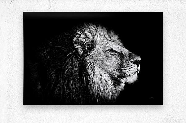Lion with Attitude  Metal print