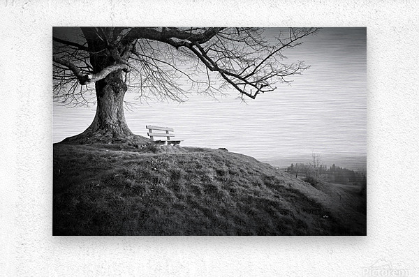 lonely bench under a tree  Metal print