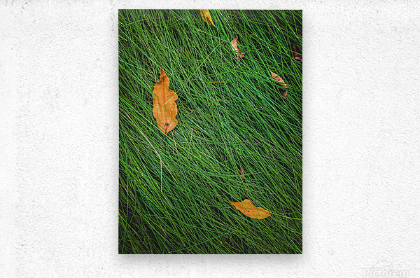 green grass field background with dry brown leaves  Metal print
