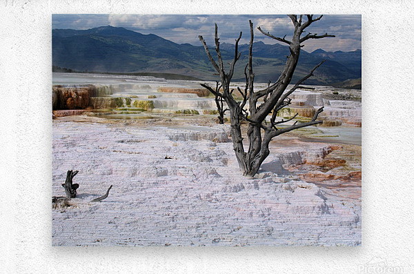Mammoth Hot Springs Yellowstone National Park  Metal print