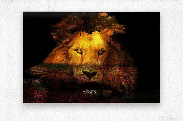 The Lion Watches  Metal print