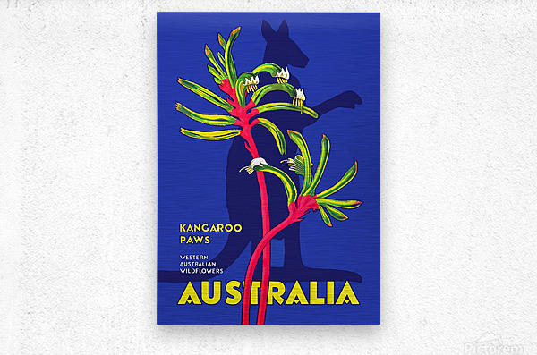 Kangaroo Paws Australia  Metal print