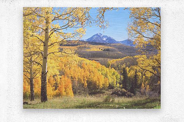 Sunshine Peak through the Aspen  Metal print