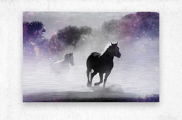 Wild Horses in Nature  Metal print