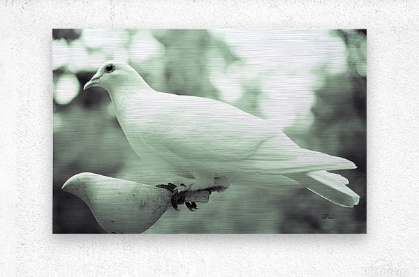 Dove enjoying a meal  Metal print
