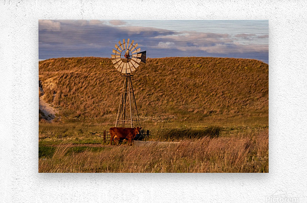 Late Afternoon Drink In The Sandhills  Metal print