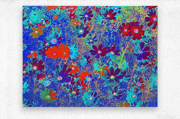 Cosmos Flowers Blue Red  Metal print