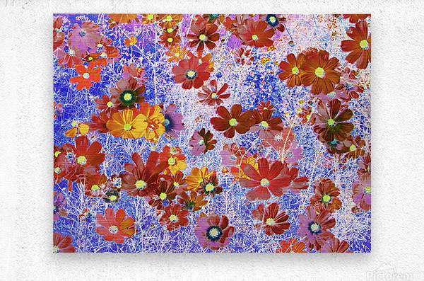 Cosmos Flowers Brown  Metal print