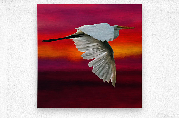 Egret in sunset  Metal print