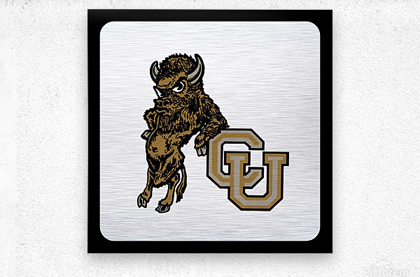 vintage college mascots colorado buffalo art  Metal print