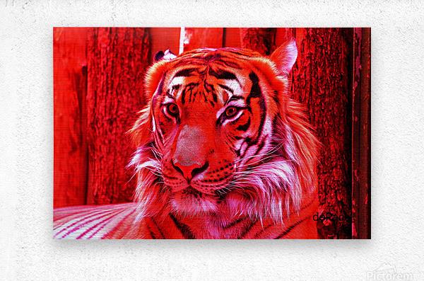 Rare Red Tiger  Metal print