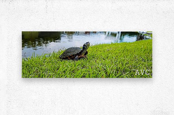Turtle Portrait  Metal print