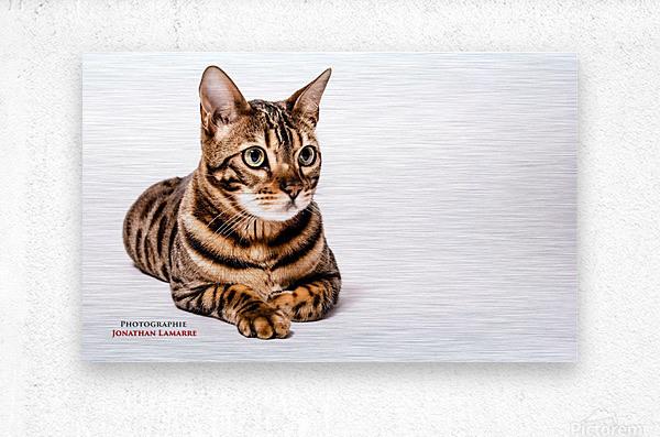 Cat life  Metal print