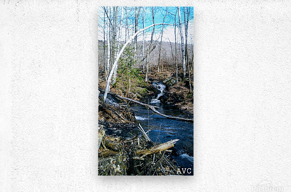 Brook through the Forest  Metal print