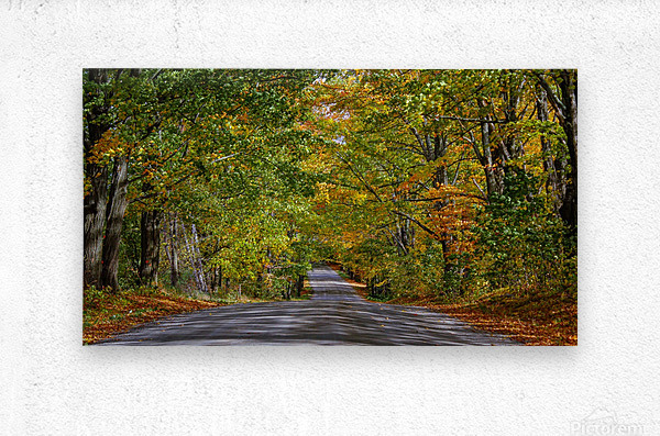Fall Colors over a Country Road  Metal print