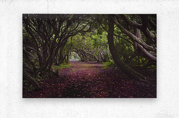 Rhododendron arched walkway  Metal print