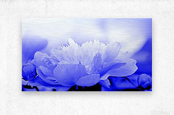 Heavenly Peony Blue  Metal print