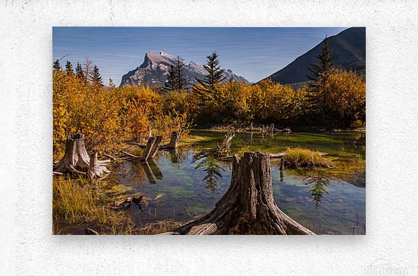 Vermilion Lakes Pond IMG_7045   Metal print