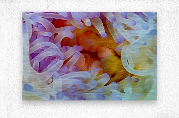 Sea Anemone 5  Metal print