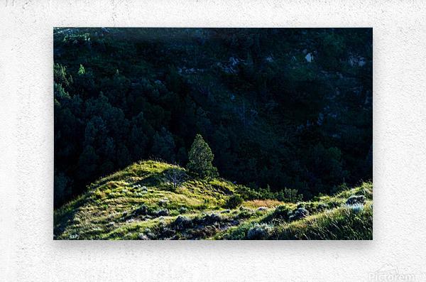 Lonesome Tree  Metal print