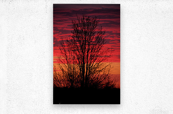 Missouri Sunset part 1  Metal print