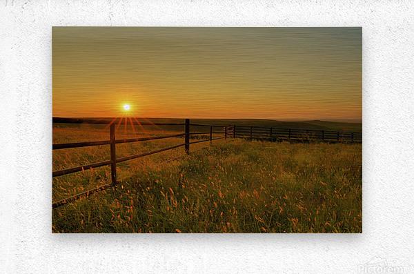 Cattle Pens Morning Sunburst  Metal print