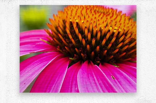 Cone Flower  Metal print