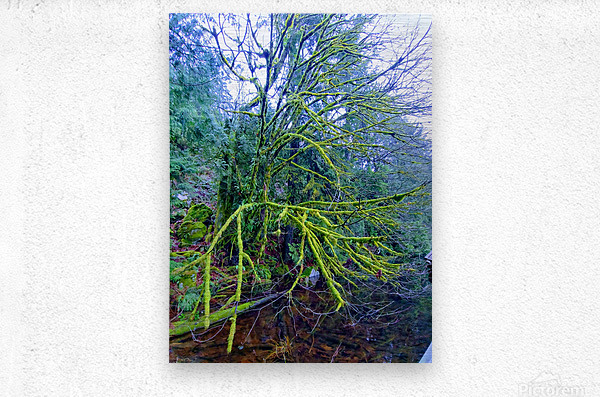 MOSSY BRANCHES  Metal print