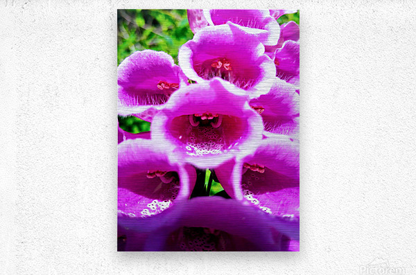 MOUTH OF THE DIGITALIS  Metal print