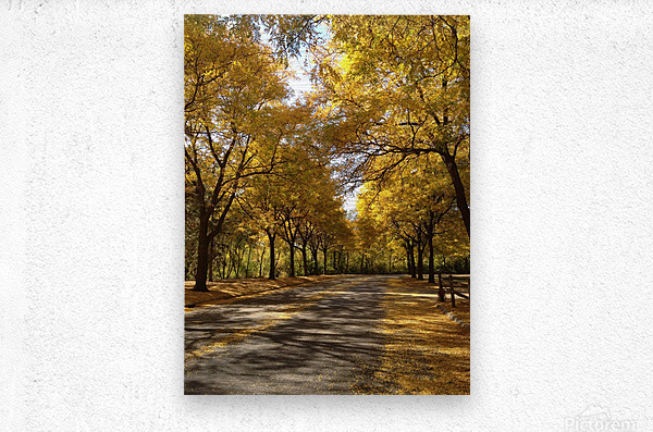 Autumn on Olivers End  Metal print