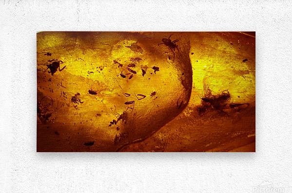 Ancient Insects Trapped in Amber  Metal print