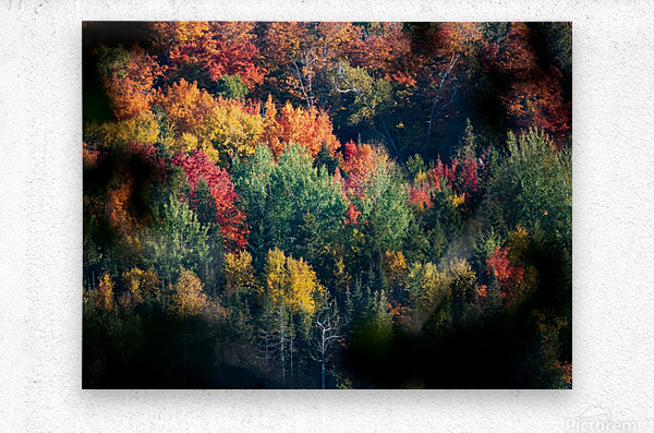 autumn abstract view  Metal print