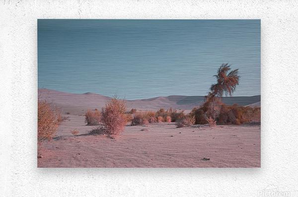 Misty Desert  Metal print