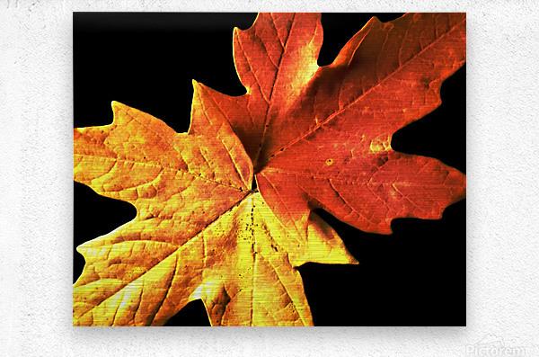 Fall Maple Leaves 3  Metal print