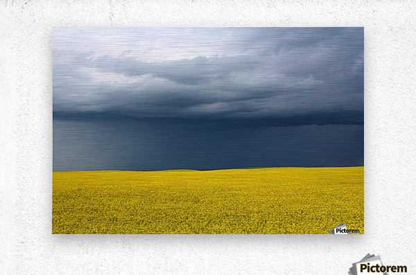 Summer Canola  Metal print