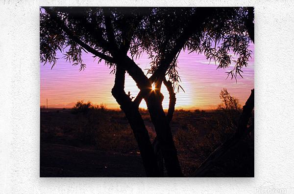 Tamarisk Sunset  Metal print