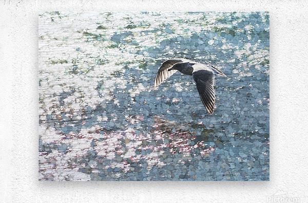Sparkling Gull   Metal print
