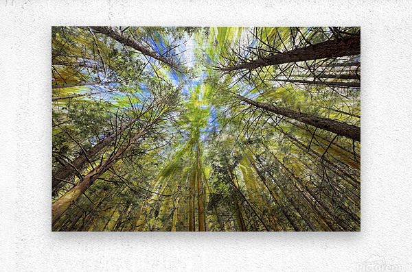 Forest Particles  Metal print