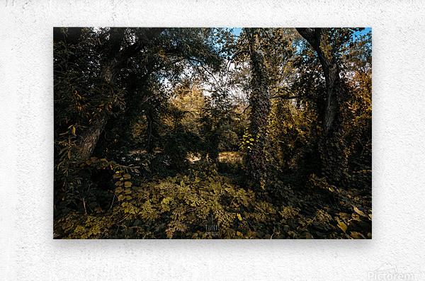 Monet style 1  Metal print