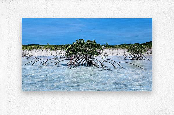Mangroves in Estuary  Metal print