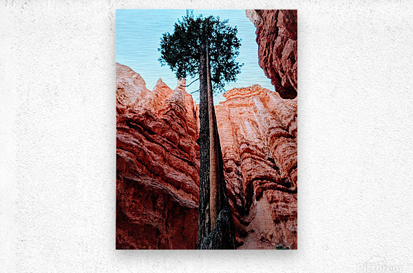 Bryce Canyon II  Metal print