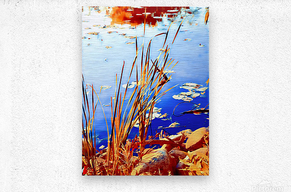 Reed Grasses   Metal print
