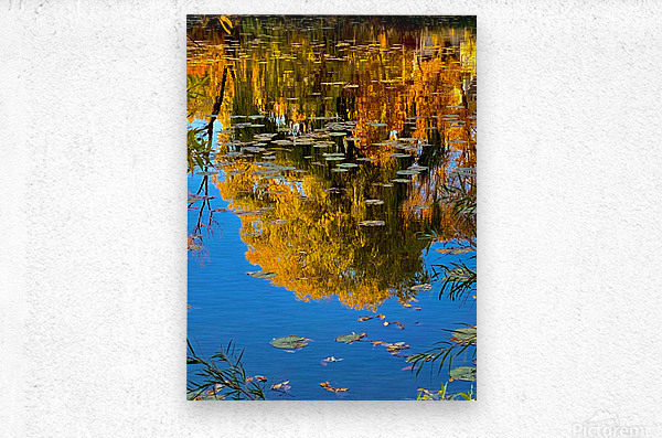 autumn reflection  Metal print