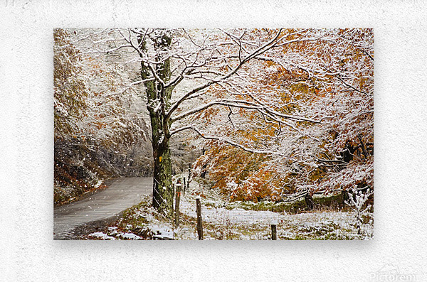 October snow Canaan Valley WVa  Metal print