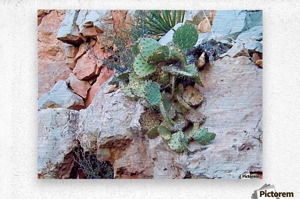 Cactus  Impression metal
